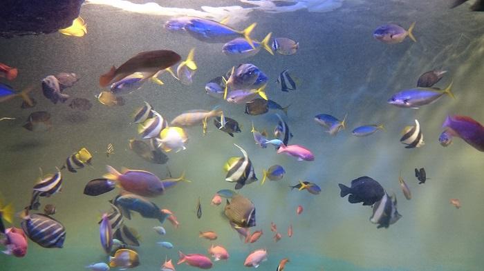 あつ森水族館